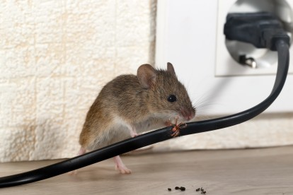 Pest Control in Pimlico, SW1. Call Now! 020 8166 9746