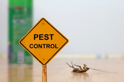 Pest Contol in Pimlico, SW1. Call Now 020 8166 9746